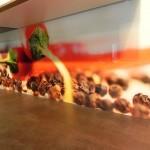 Küchen Glasrückwände